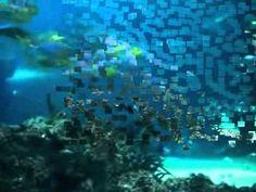 Kinderliedje - Visje Visje The Ocean, Videos, Underwater, Net, Teaching, Pirates, Ocean, Education, Video Clip