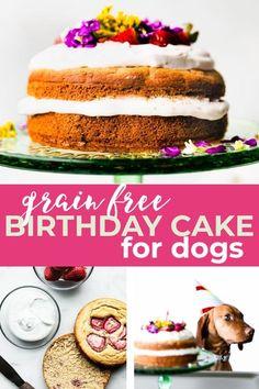 Dog Safe Cake Recipe, Dog Cake Recipes, Dog Treat Recipes, Dog Food Recipes, Grain Free Dog Cake Recipe, Healthy Recipes, Dog Treats Grain Free, Grain Free Dog Food, Dog Cakes