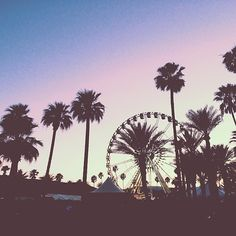 Coachella sunset.