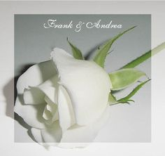 White Rose Wedding Invitations. Romantic, classy and customised to your details. Matching stationery available http://www.idovedesign.com.au