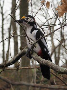 flagspætte woodpecker bird needlefelt nålefiltet