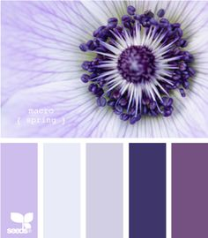 @design seeds   I love these colors together and they are a great visualization of the flower.
