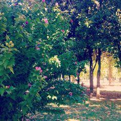 Angoli fioriti, Parco della Montagnola Bologna
