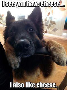 German Shepherd beggar #dogsandpuppiesgermanshepherd