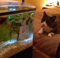 My cat and my fish Aquarium, Fish, Cats, Goldfish Bowl, Gatos, Aquarium Fish Tank, Pisces, Aquarius, Cat