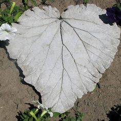 Rhubarb Leaf Step Stone A few changes--use hardware cloth to reinforce instead of chicken wire, use any large leaves not just rhubarb, hosta and pumpkin leaves work well Cover with plastic when curing Garden Art, Step Stones, Garden Stepping Stones, Concrete Leaves, Diy Garden, Garden, Garden Crafts, Outdoor Projects, Yard Art