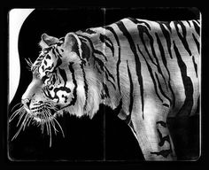 highly detailed pen and ink animal illustrations by tim jeffs (15)
