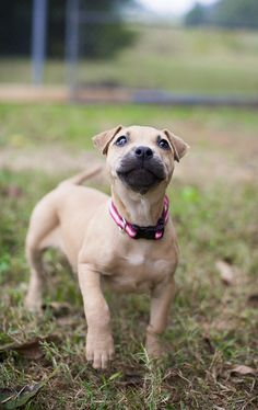 adoptable puppy, Humane Society Union County, NC Photo by Dani Nicole Photography