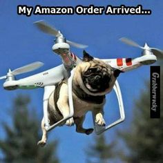 Pug in mid air!