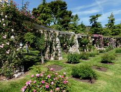 Rose garden in Barcelona: Parc de Cervantes