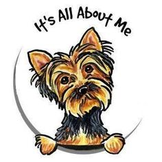 Ain't THAT the truth!  (You know if you have a Yorkie!)