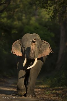 """Elephant: """"Wait up for me!"""" (Photo By: Oinad C.L.)"""