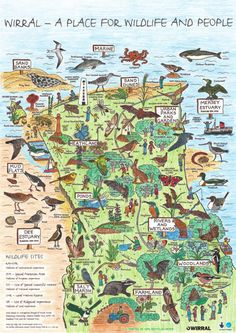 Get into Wirral& Bio-diversity. You can collect your free map at the Eastham Country Park Visitor Centre . Diversity Poster, Wales Map, Liverpool Home, Free Maps, New Brighton, Urban Park, England And Scotland, Travel Posters, Art Posters