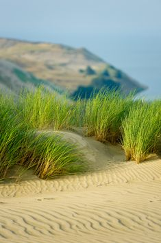Baltic Dunes | Lithuania (by Swapartment)