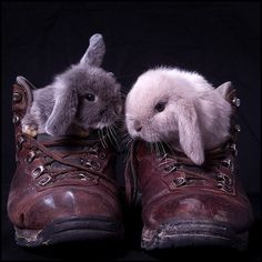 As long as we're in your shoes, you're not going anywhere! Let's negotiate some bunny-snuggling first