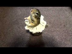 ballet squirrel