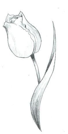 how to draw a tulip step by step drawing tutorials for kids and