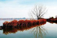Pond of Utxafava. Ivars d´Urgell.
