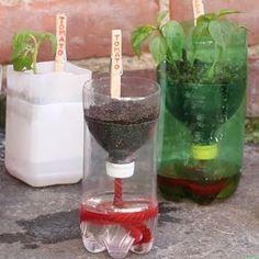Mit diesen selbstbewässernden Anzucht-Töpfen aus Plastikflaschen gedeiht jede Pflanze