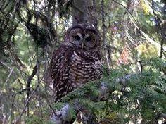 #owls# Natural surrounding