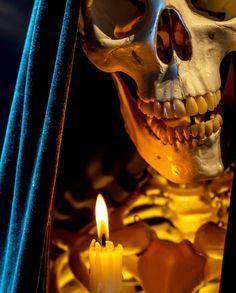 Skull Reference, Figure Reference, Skeleton Tattoos, Skull Tattoos, Crane, Lioness Tattoo, Skull Artwork, Skull Wallpaper, Samurai Art