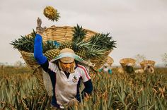 """Pineapple Pitch 