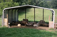 goat shed from carport - Google Search