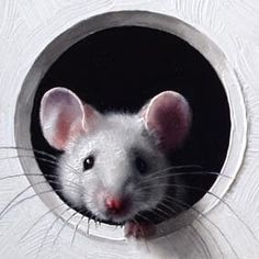 Is it safe to come out? Animals And Pets, Baby Animals, Cute Animals, Animal Paintings, Animal Drawings, Mouse Illustration, Cute Rats, Pet Mice, Photo Chat