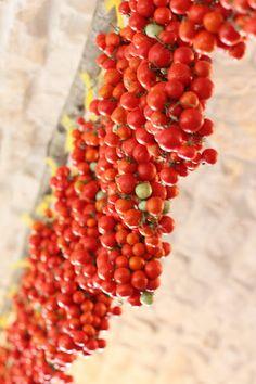 Pomodori pennuli pugliesi, Ceglie Messapica, Puglia, Italy