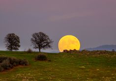 Last night's supermoon appears as a huge, glowing orb over Cronan Ranch. At nearby Sutter's Mill, the discovery of gold started the California gold rush. Now, the area is famous as one of the most...