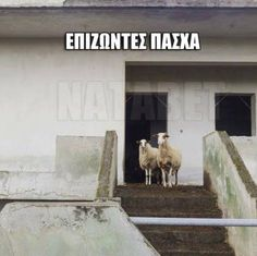 Funny Picture Quotes, Funny Pictures, Funny Quotes, Greek Quotes, Some Fun, I Laughed, Like4like, Lol, Humor
