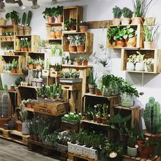 Magnificent Small Urban Garden Ideas You'll Want For Your Living Space - HomelySmart - Garden Care, Garden Design and Gardening Supplies Garden Shop, Home And Garden, Deco Cactus, Garden Design, House Design, Decoration Plante, Room With Plants, Deco Floral, Plant Decor