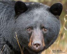 Resultado de imagen para bear + eyes