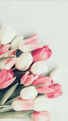 Ideas For Flowers Tulips Wallpaper - Vintage - Blumen Pink Tulips, Tulips Flowers, Pretty Flowers, Flowers Garden, Pink Roses, Flowers Nature, Floral Flowers, Tea Roses, Yellow Roses