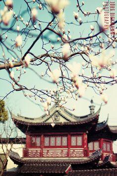 Yu Garden - Shanghai, China