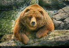 Hello There Bear - stock photo