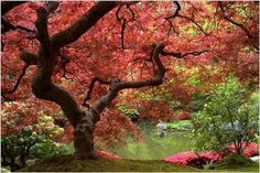 INCREDIBLE TREE red foliage POND FLOWERS poster COLORFUL PEACEFUL 24X36 new