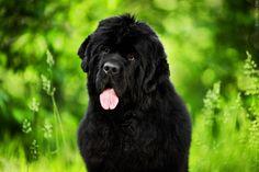 И последняя моя моделька на Dog Open Air- Баги(Alpha Tauri Dinastiya Soverchenstva):Еще по теме:Первый благотворительный Dog Open Air в Киеве!БШО ВиваВельш-корги пемброк…