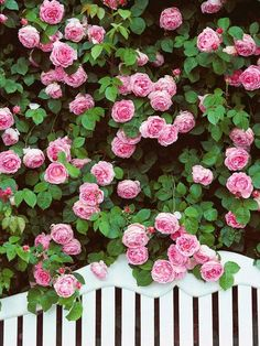 Discover different kinds of cottage garden plants from experts at HGTV. Learn tips for using cottage garden plants in your yard. Garden Cottage, Rose Cottage, Cottage Style, Bloom, Beautiful Roses, Beautiful Gardens, Beautiful Wall, Types Of Roses, Colorful Roses