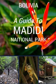 Madidi National Park is a jungle paradise situated in the in the upper Amazon river basin of Bolivia. http://www.bolivianlife.com/madidi-national-park/ #travel