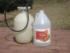 Got Weeds? Use Vinegar, Not Roundup  Just sprayed my neighbor's sidewalk-looking good!