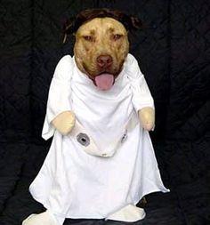 Dogs with starwars costumes. - humorsharing.com