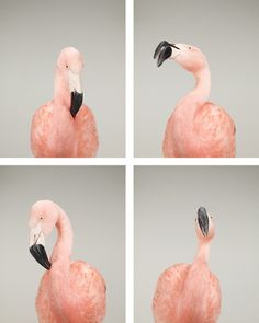 flamingo portrets