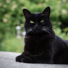 Black cat Jaz by Helen Haden