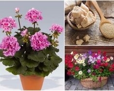 I Am Organic Gardening Product Organic Gardening, Planting Flowers, Plants, Garden, Outdoor, Organic Gardening Pest Control, Flowers, Indoor Plants, Gardening Tips