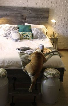 I love everything about this picture! Someone help that dog up on the bed! #design #pets #bedroom