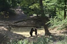 Libearty Bear Sanctuary—Romania: After seeing bears caged and exploited across the country, Cristina Lapis founded this organization to expose them to their natural surroundings. Fifty bears have been relocated to an oak forest in the Carpathian Mountains, where a veterinary clinic, hibernation dens, and fresh-water pools are available. (Photo: Libearty Bear)