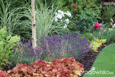 Zimozielony ogród przy białym domu - strona 214 - Forum ogrodnicze - Ogrodowisko