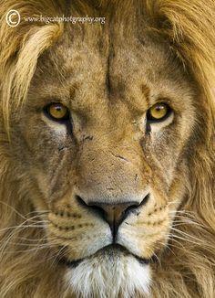 I am handsome - even close up!