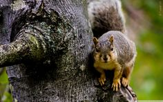esquilo - squirrel